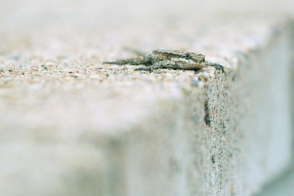 Download Free Stock HD Photo of Lizard on wall Online