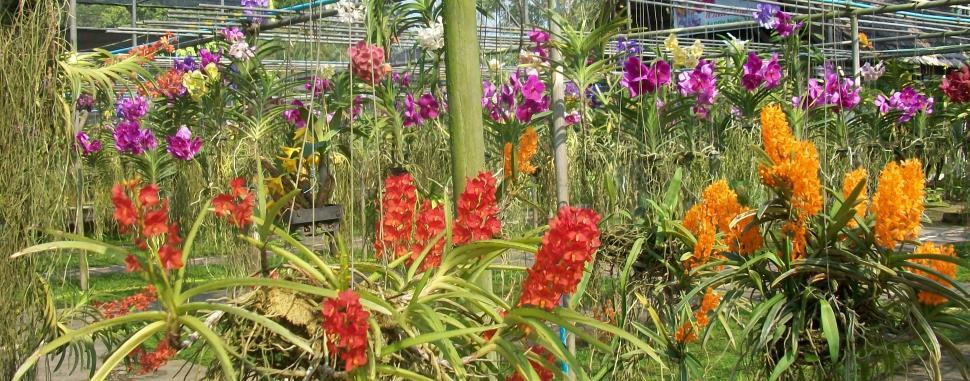 Download Free Stock Photo of Orchid Farm