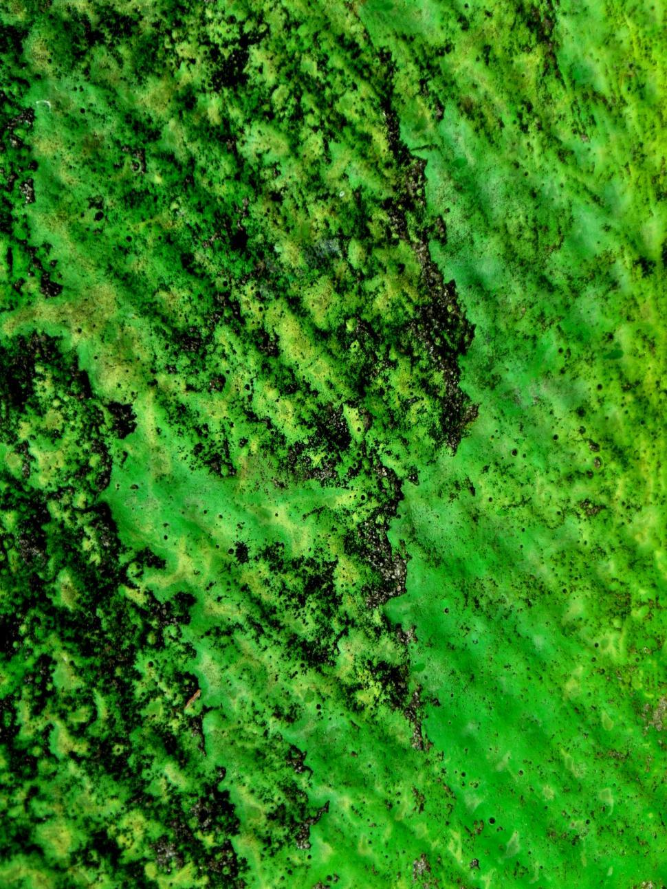 Download Free Stock HD Photo of Green Grunge Texture Online