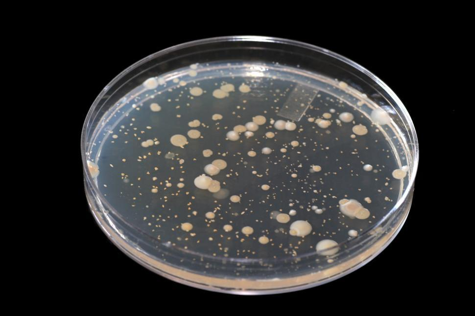 Download Free Stock HD Photo of Microbiology Online