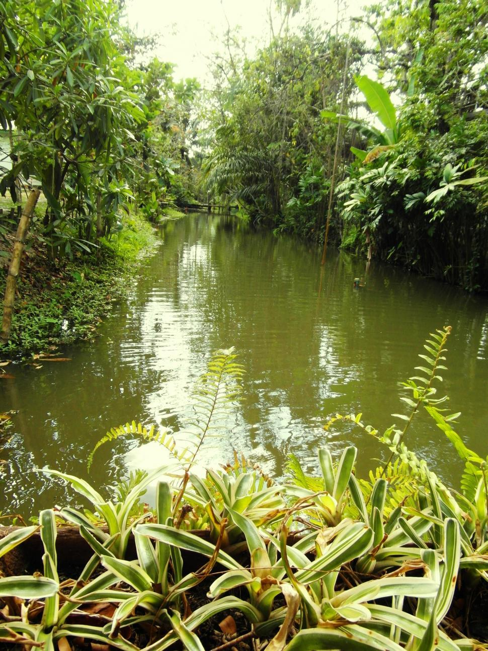 Download Free Stock Photo of Jungle River