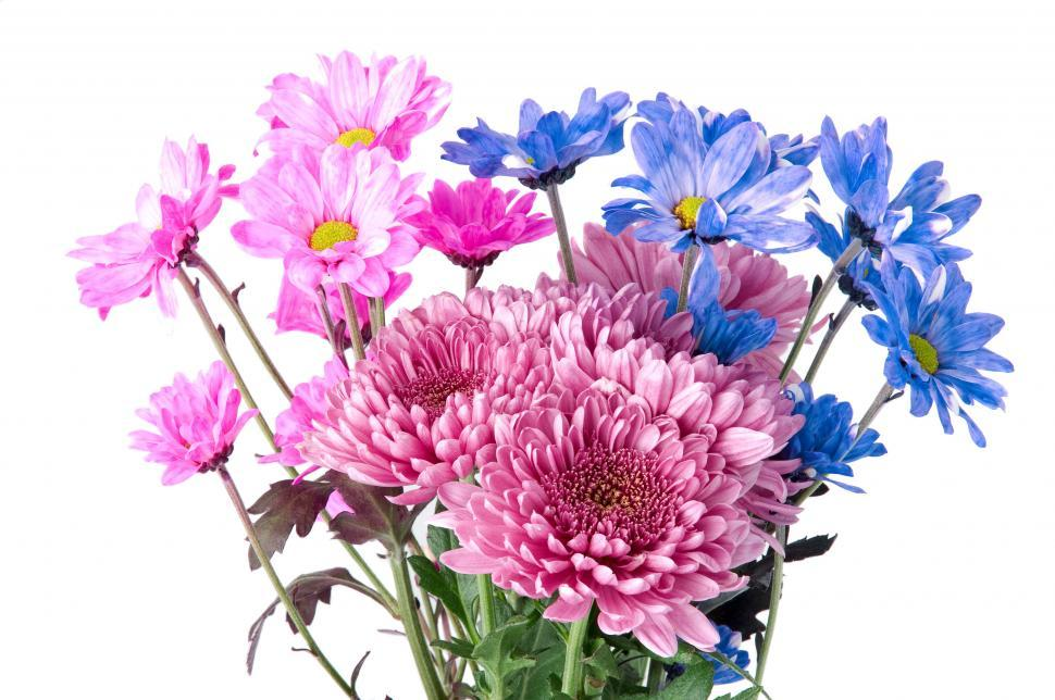 Download Free Stock Photo of Flowers