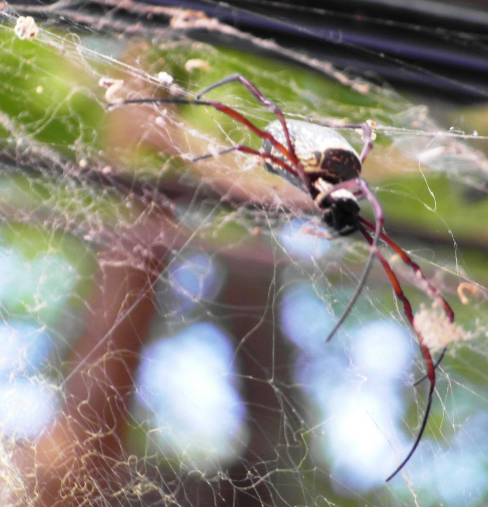 Download Free Stock Photo of Scary Spider