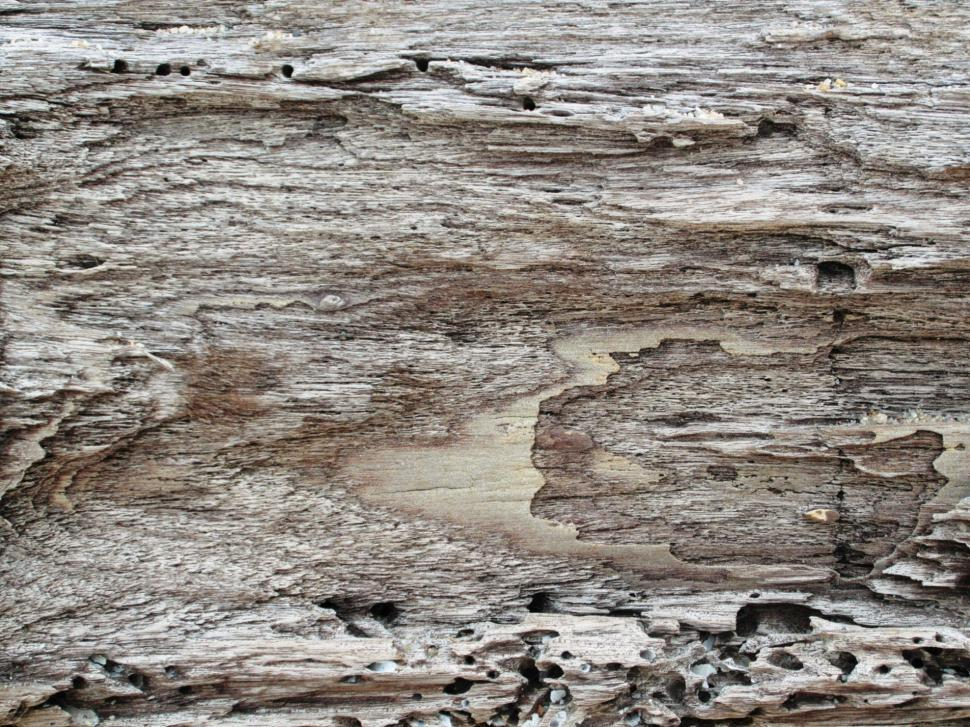 Download Free Stock Photo of Driftwood Background