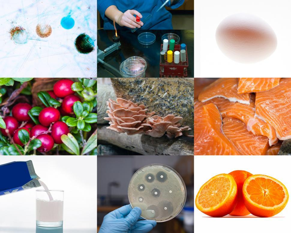 Download Free Stock HD Photo of Food Safety Online