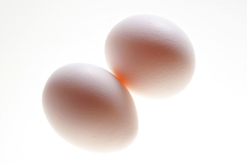 Download Free Stock Photo of Egg