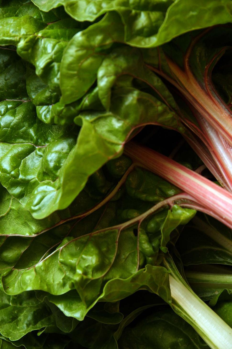 Download Free Stock HD Photo of Fresh Cut Healthy Swiss Chard Online