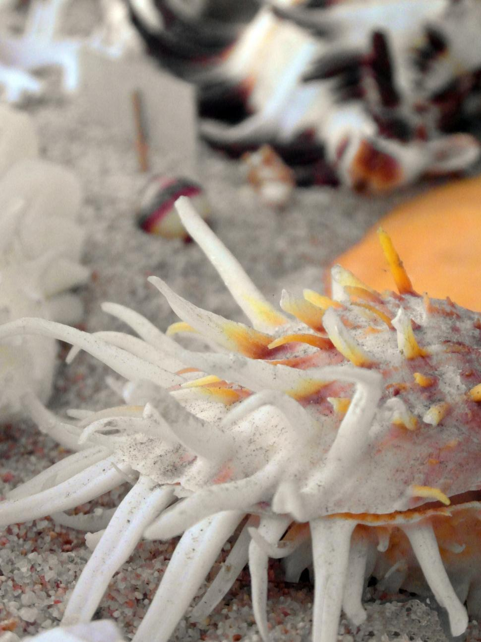 Download Free Stock Photo of Seashells