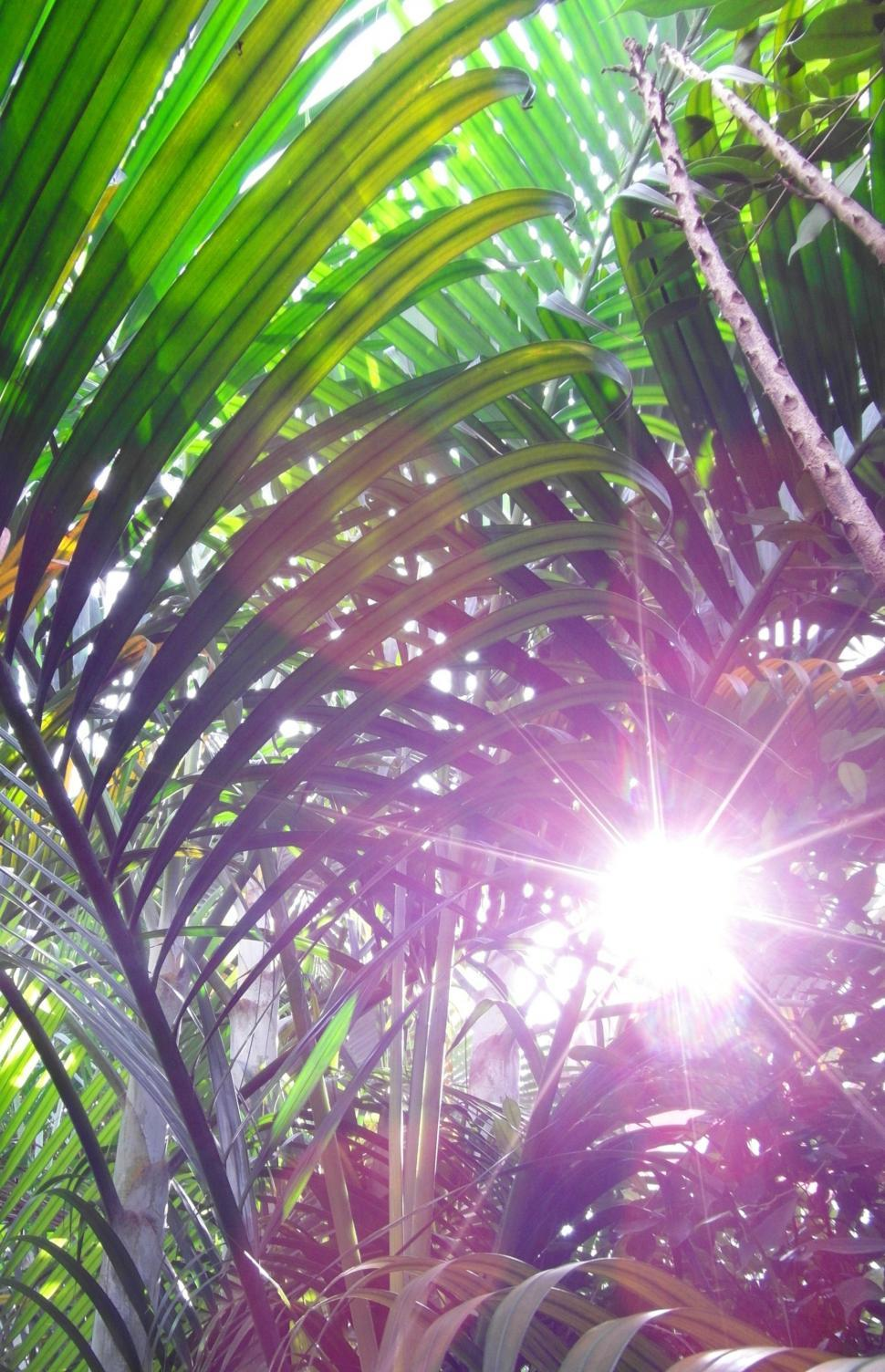 Download Free Stock Photo of Sunny Jungle