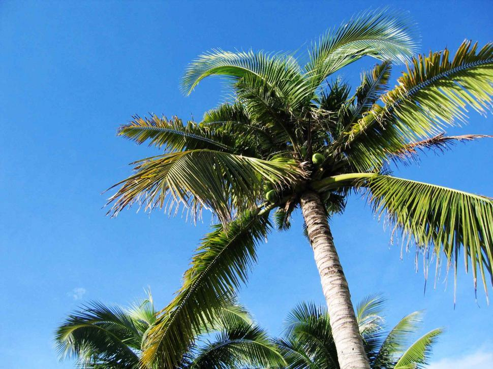 Download Free Stock Photo of Palm tree and sky