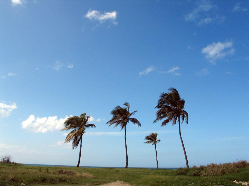 Download Free Stock Photo of Palms at the Beach
