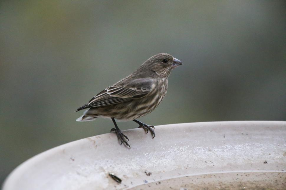 Download Free Stock Photo of Small yard bird