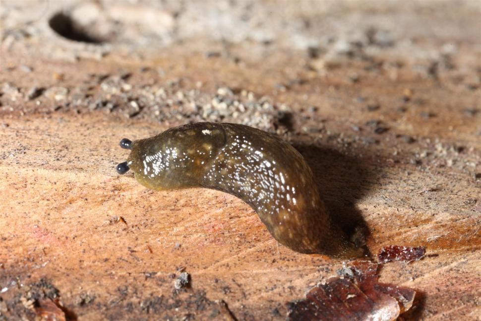 Download Free Stock HD Photo of Slug Macro Online