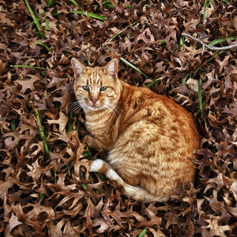 Download Free Stock HD Photo of Autumn Cat Online