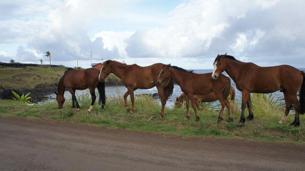 Download Free Stock HD Photo of Horses Under a Rainbow on Easter Island Online