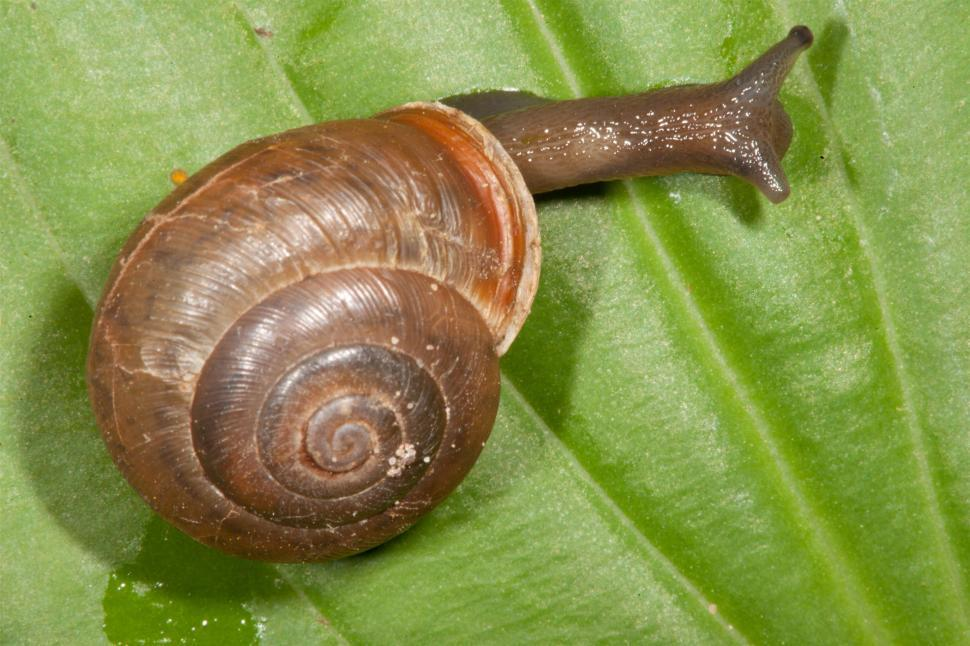 Download Free Stock Photo of Snail