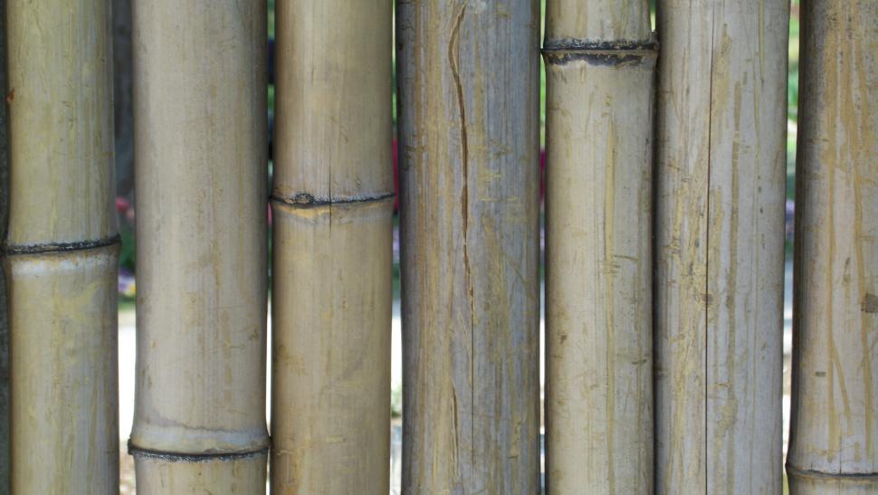 Download Free Stock HD Photo of Bamboo sticks Online