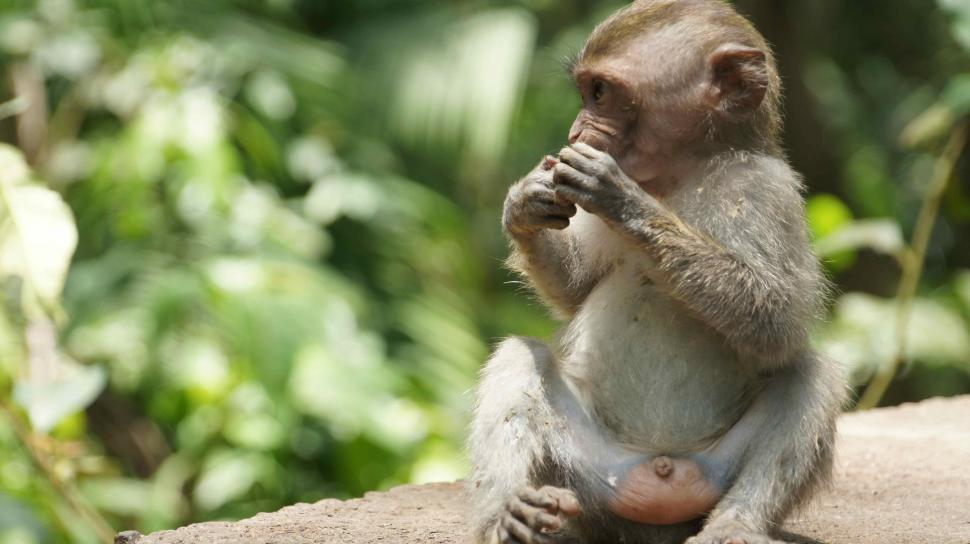 Download Free Stock HD Photo of Baby Monkey Hanging Out Online