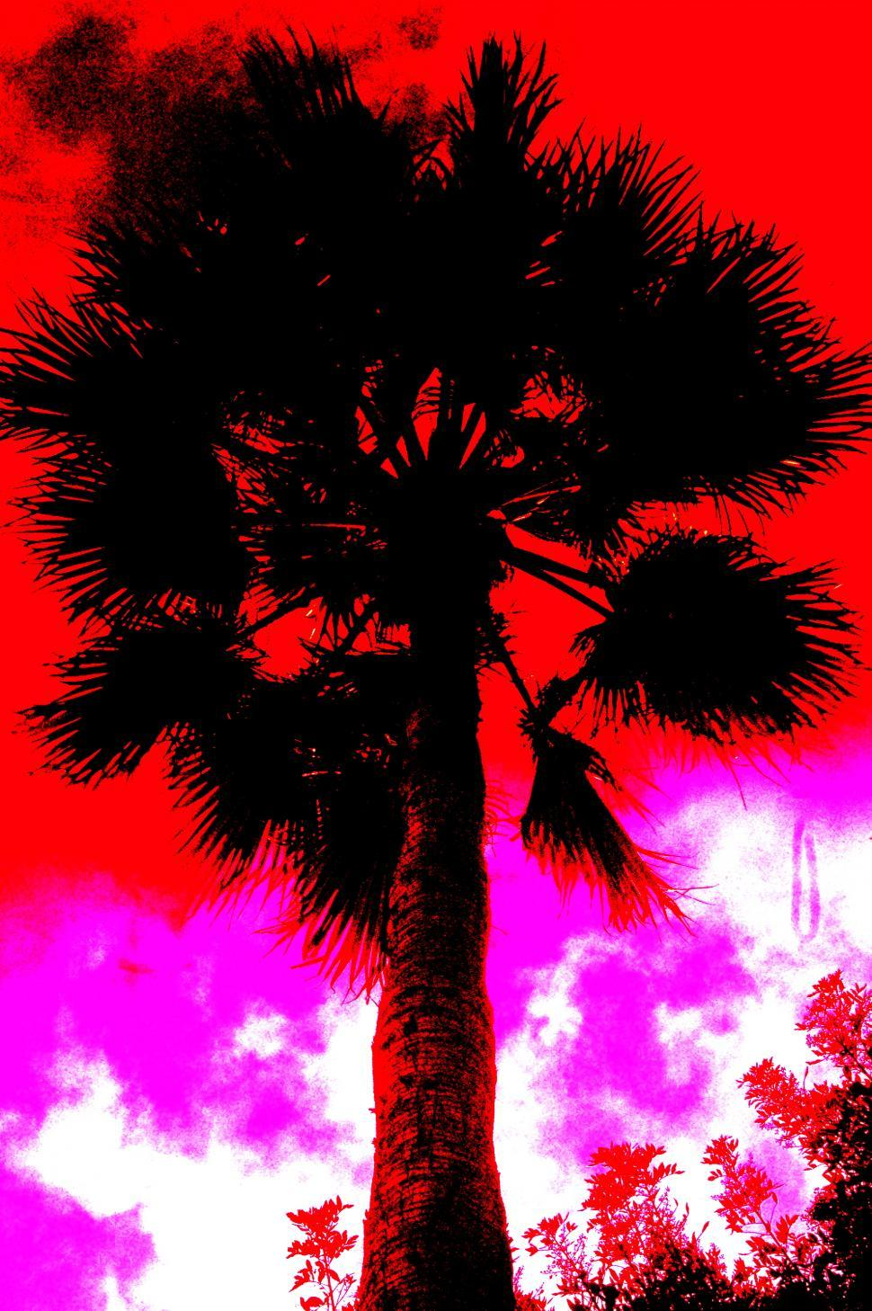 Download Free Stock HD Photo of Palm Tree in the Radiant Red Sky Online