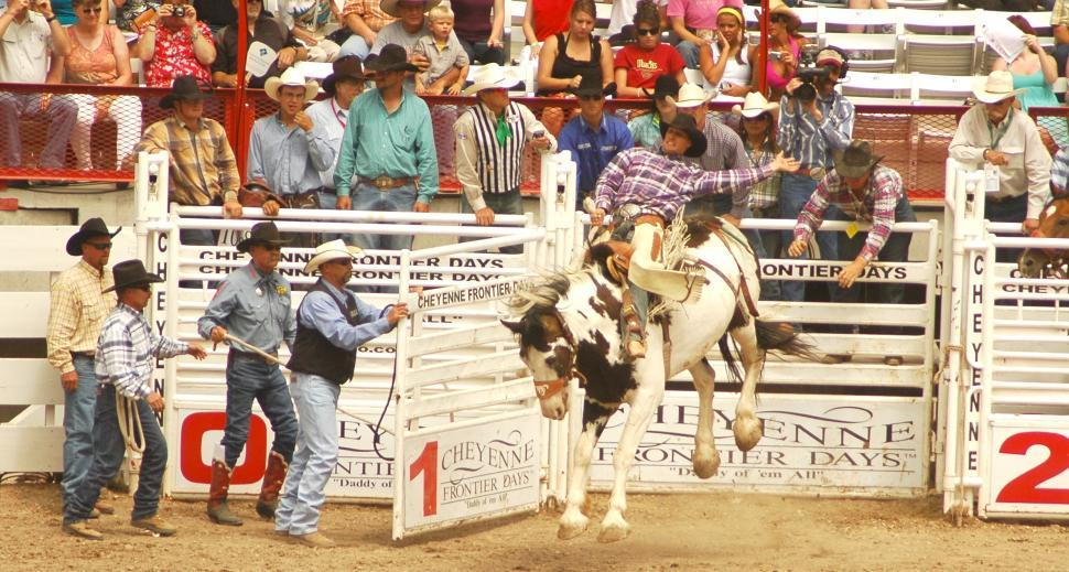 Download Free Stock Photo of Rodeo Cowboy on Bareback out of the Stall