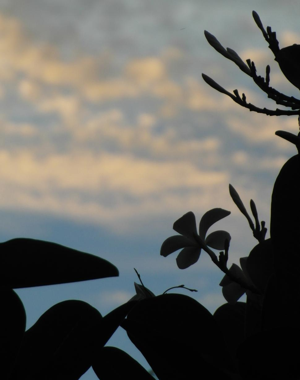 Download Free Stock HD Photo of Tropical Trees and Flowers Silhouette Online