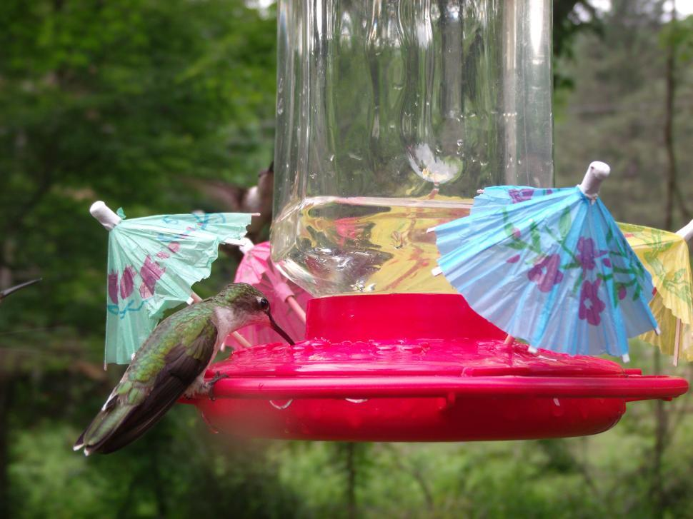 Download Free Stock HD Photo of Hummingbird Cafe ( The Bar Is Open ) Online