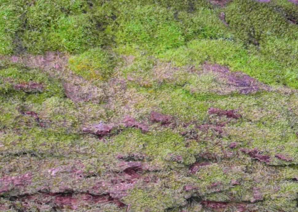 Download Free Stock HD Photo of Mossy Bark Background Online