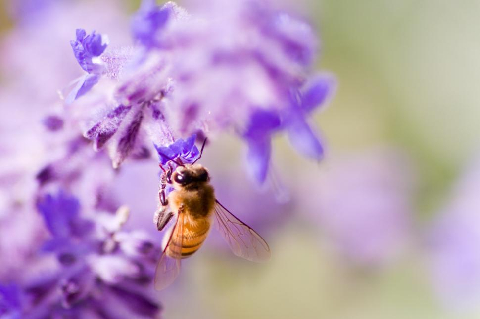 Download Free Stock HD Photo of bee Online