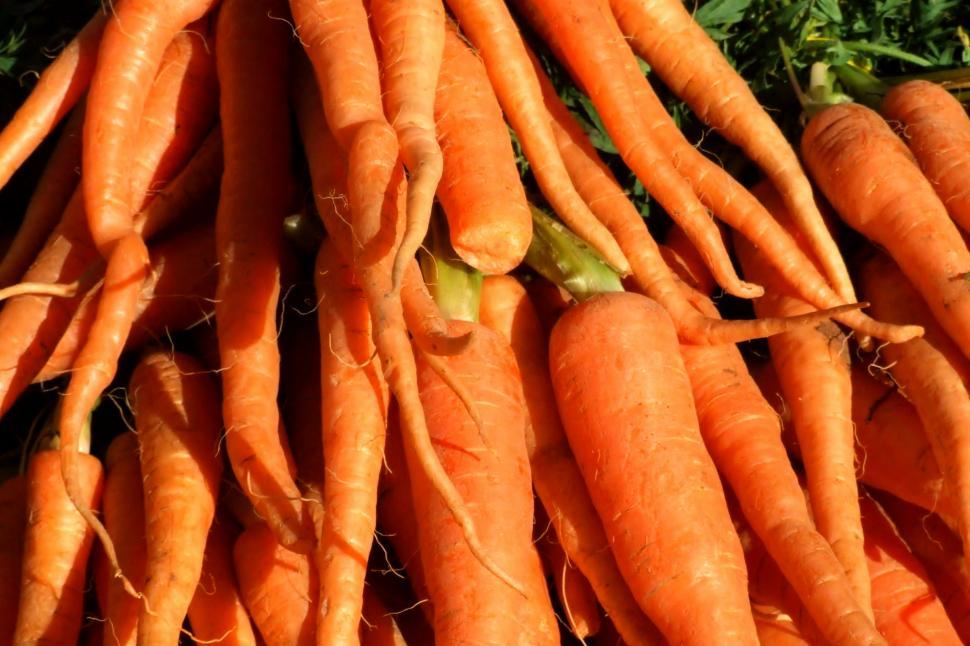 Download Free Stock Photo of Carrots