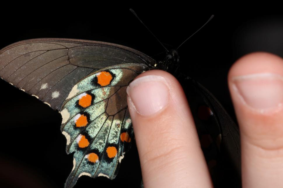 Download Free Stock Photo of Butterfly on a hand