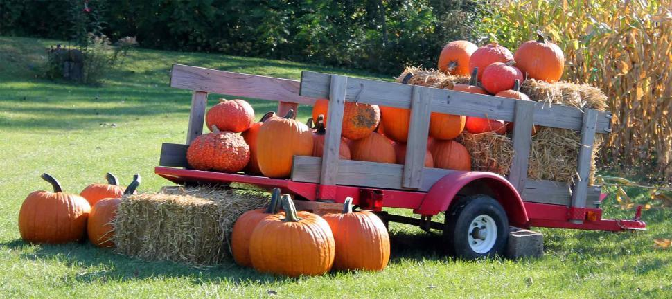 Download Free Stock HD Photo of Pumpkins in a wagon Online