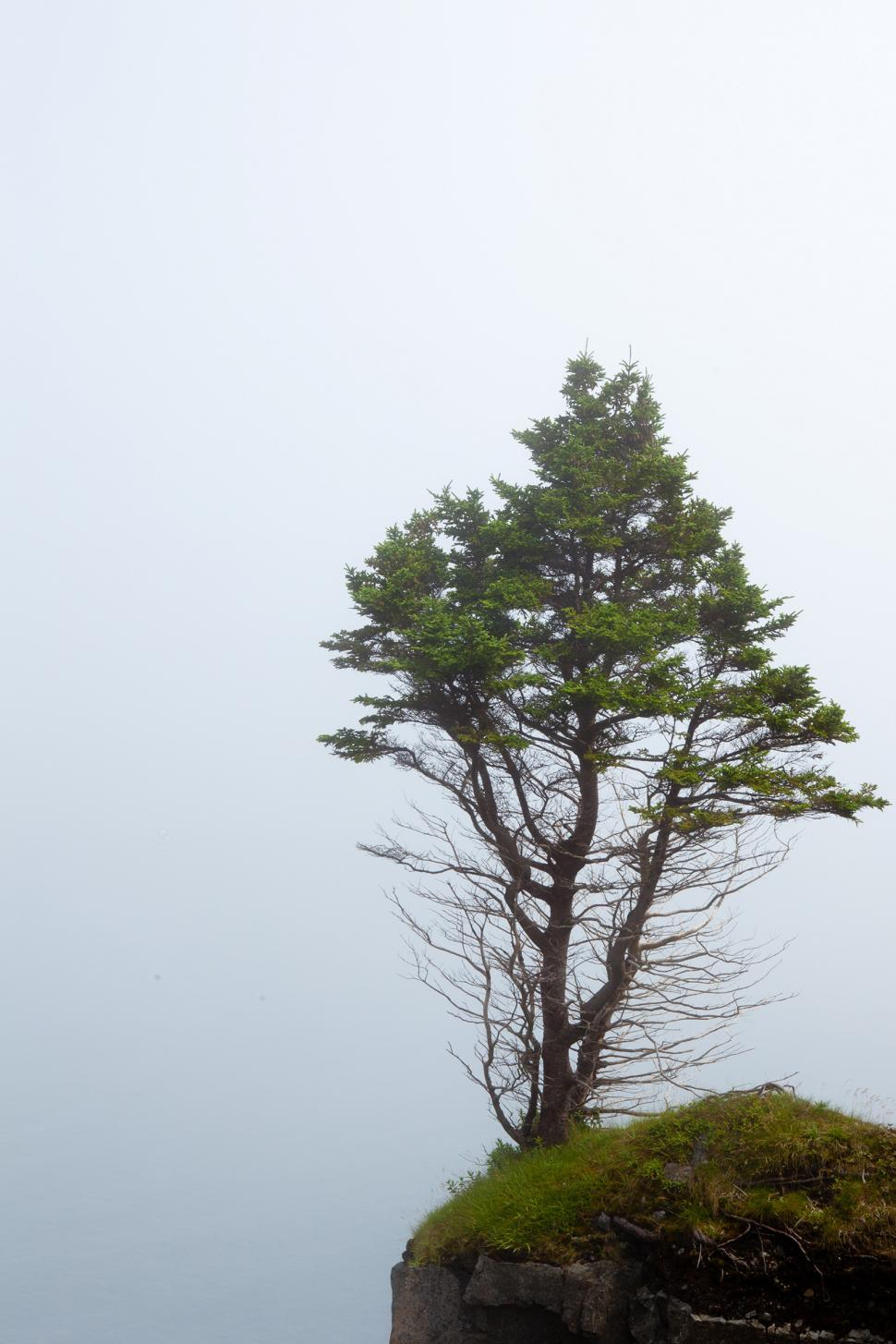 Download Free Stock Photo of Tree