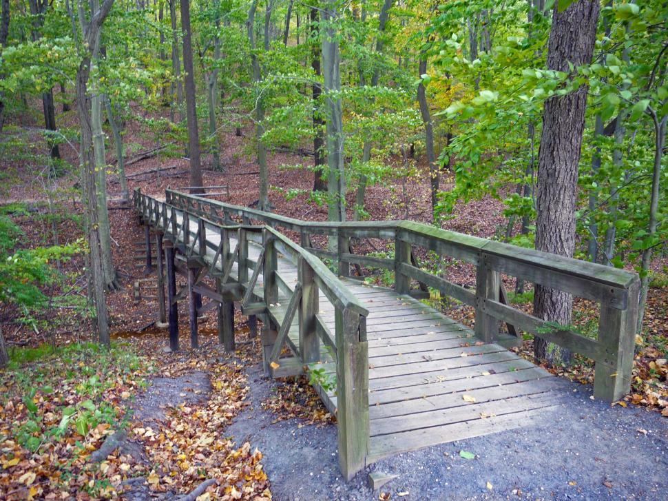 Download Free Stock Photo of Small Bridge in Forest