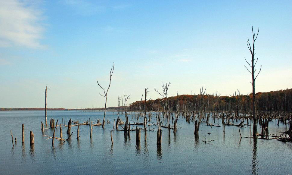 Download Free Stock HD Photo of Manasquan Reservoir Online