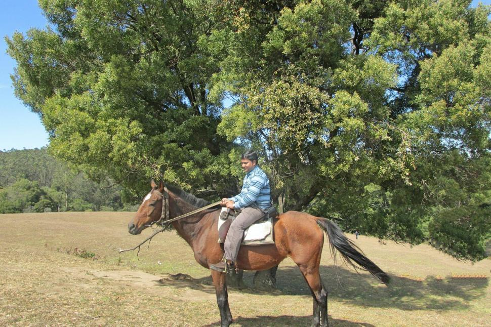 Download Free Stock HD Photo of Horse Riding Online