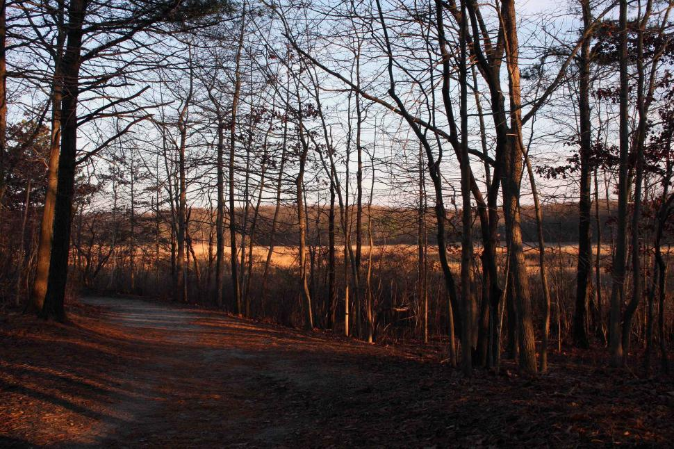 Download Free Stock Photo of Hiking trail in Cheesequake State Park NJ