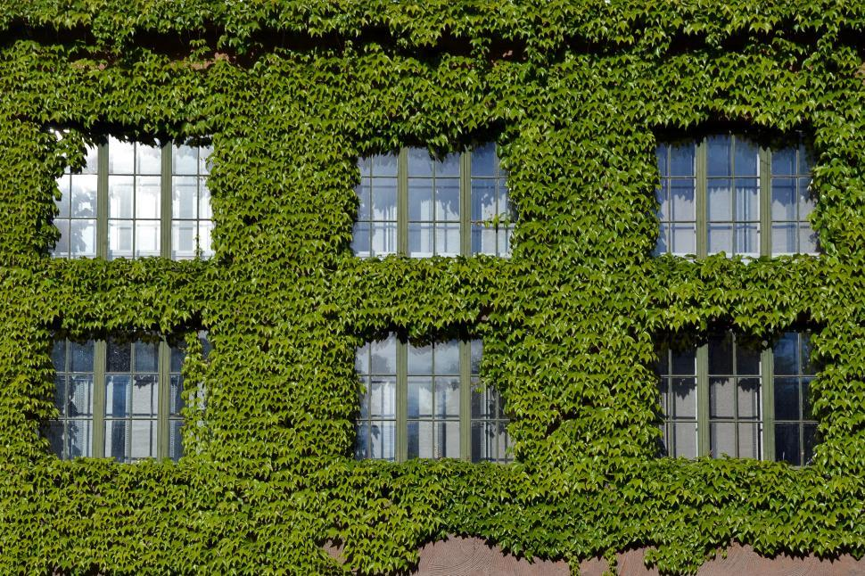 Download Free Stock HD Photo of Boston ivy Online