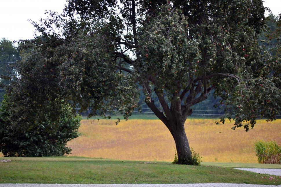 Download Free Stock HD Photo of Country Apple Tree Online