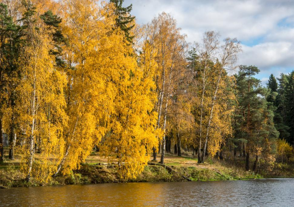 Download Free Stock HD Photo of Golden autumn Online