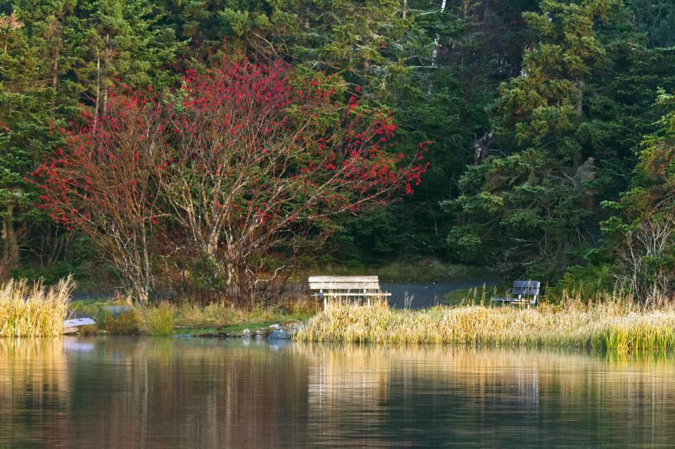 Download Free Stock Photo of Lake reflection