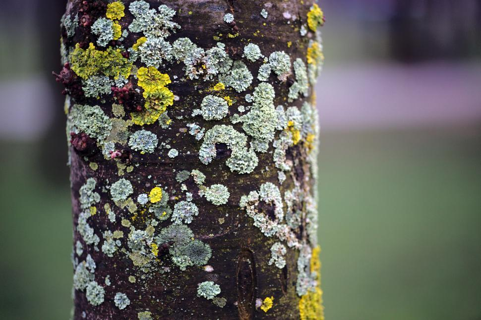 Download Free Stock Photo of Tree trunk