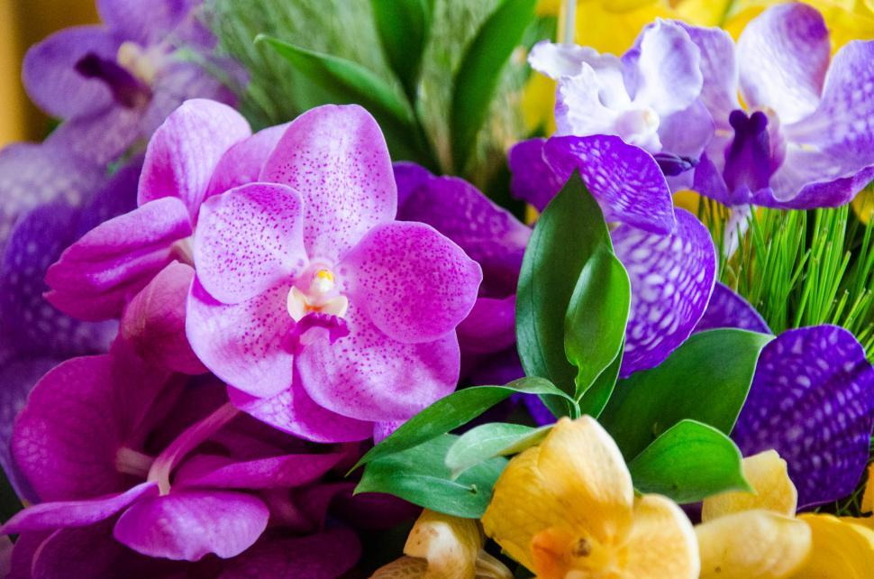 Download Free Stock Photo of Thai Orchid
