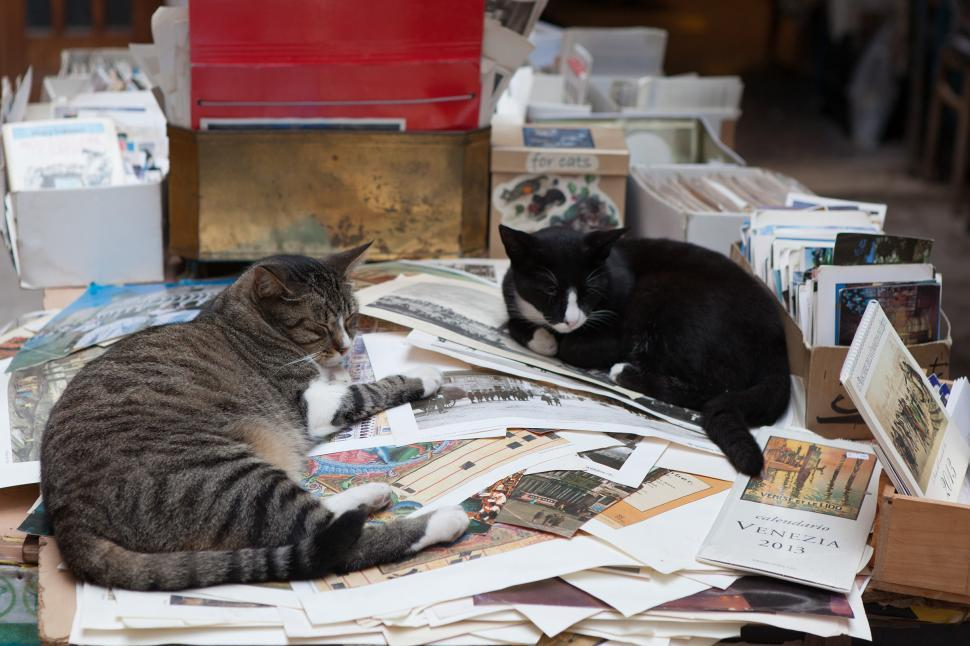 Download Free Stock Photo of Cats and Books
