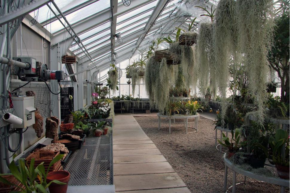 Download Free Stock Photo of Orchid Greenhouse