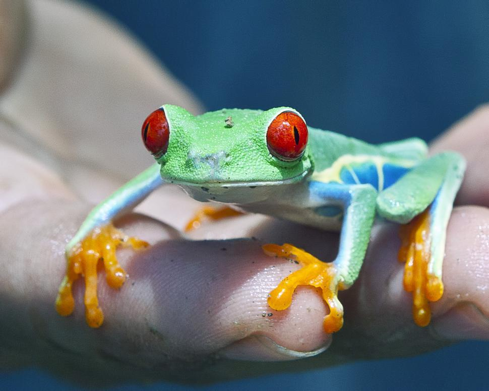 Download Free Stock HD Photo of Frog Online