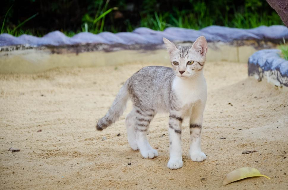 Download Free Stock Photo of Cat