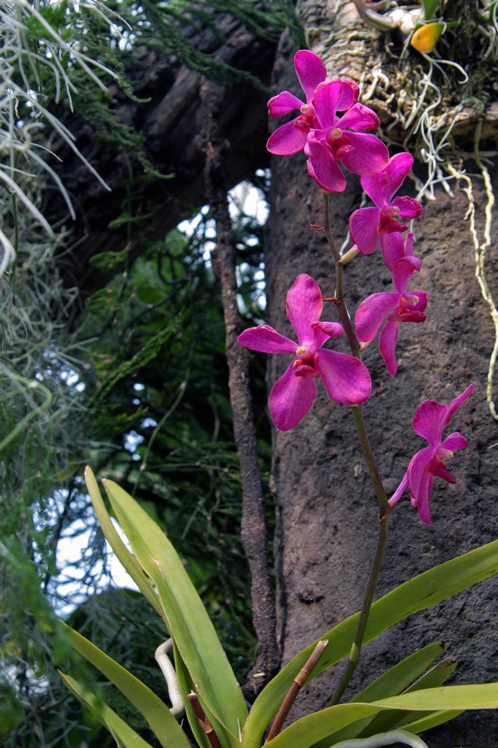 Download Free Stock HD Photo of Orchid In bloom Online