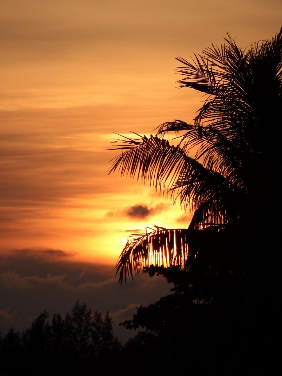 Download Free Stock Photo of Tropical Palm Tree Sunset