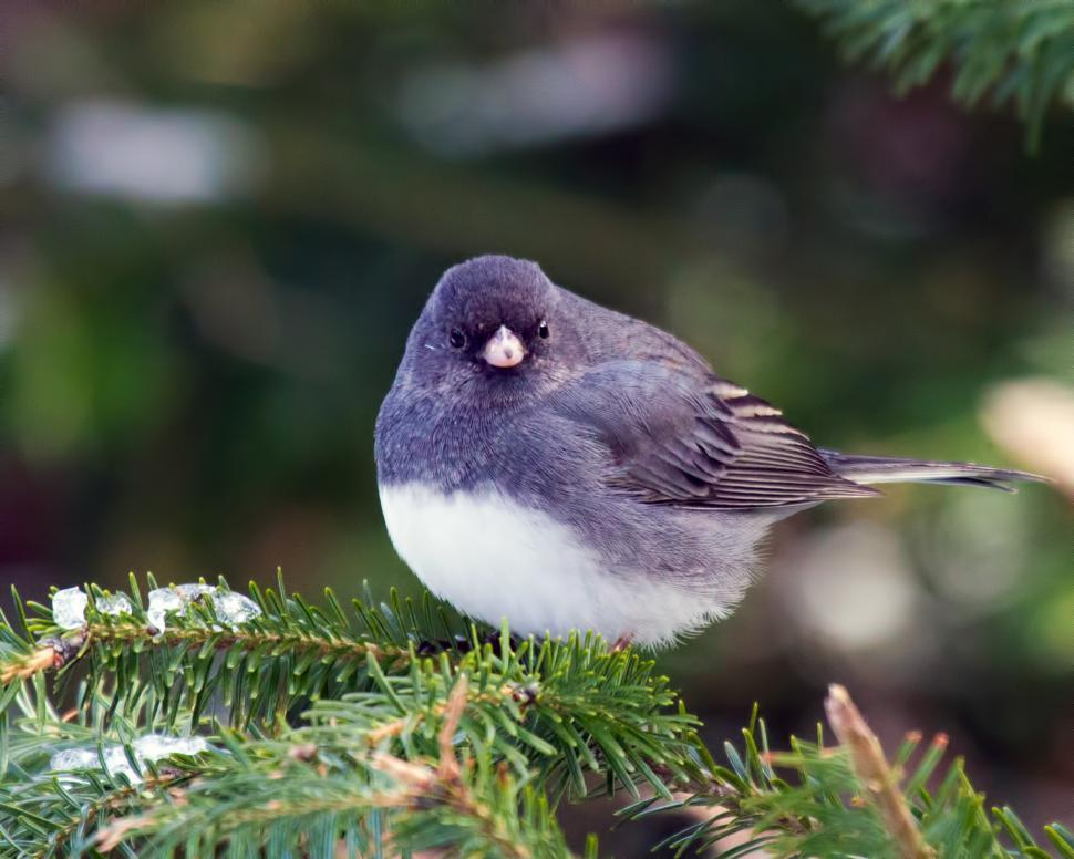 Download Free Stock Photo of Bird