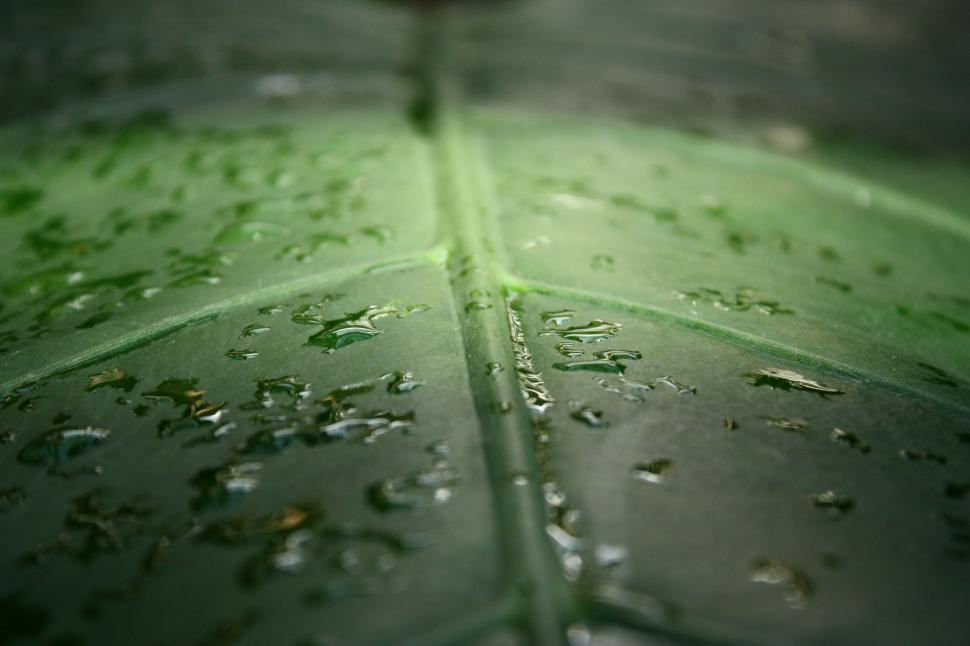 Download Free Stock HD Photo of Close-up of a large dark green tropical leaf with water drops Online